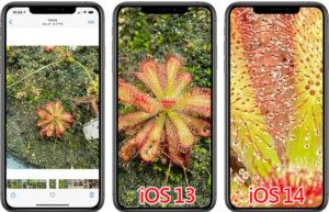 iOS 14支持进一步放大照片:瑕疵/细节一览无遗